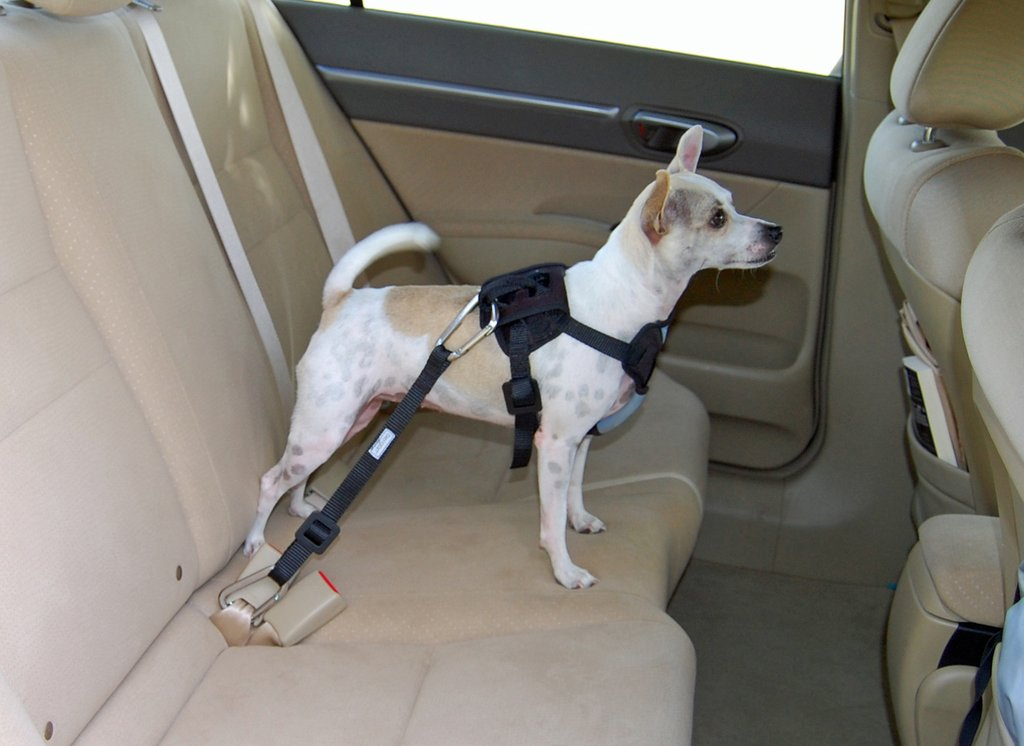 The 10 Best Dog Seat Belts to Buy 2019 - Auto Quarterly