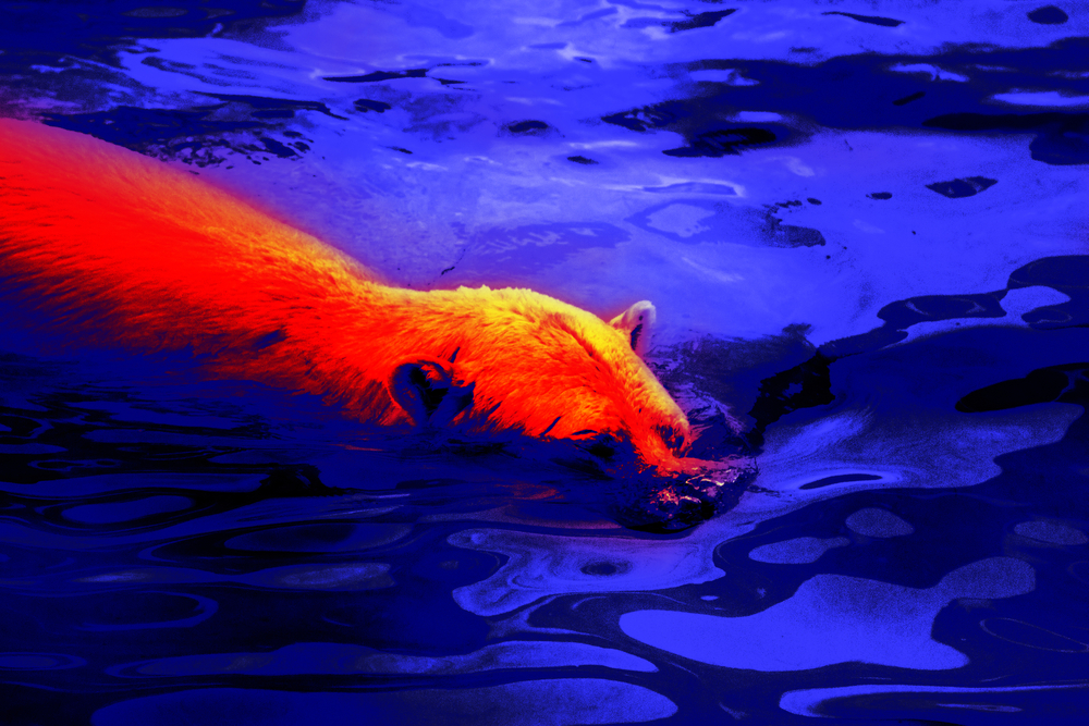 a bear as it appears through a thermal imaging monocular